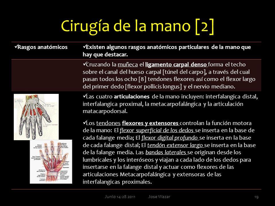 Cirugía de la mano [2] Rasgos anatómicos